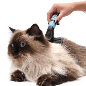 aseo gato persa